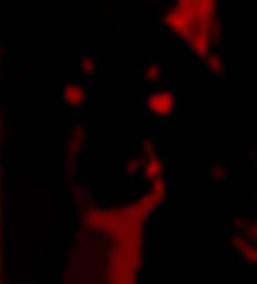 diabolic-dog-22