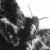 Imagen de perfil de collazo11